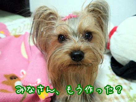 1_20091207173023.jpg