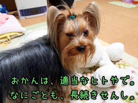 1_20091209190603.jpg