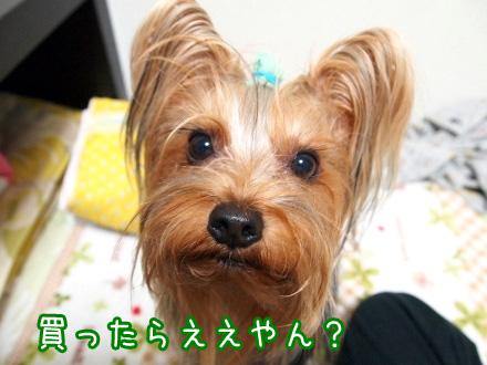 1_20091216194845.jpg