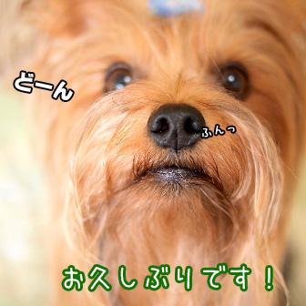 1_20110928114940.jpg