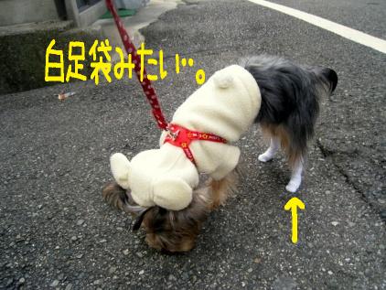 お散歩に行くぞ~!