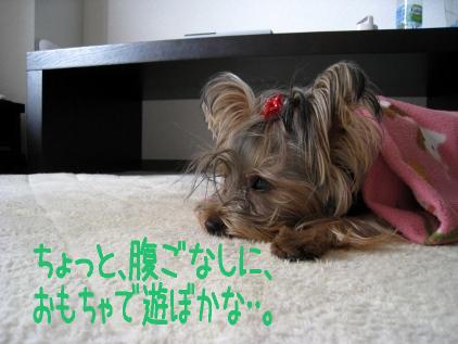 2_20090109195347.jpg