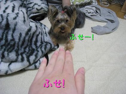 2_20090131194812.jpg