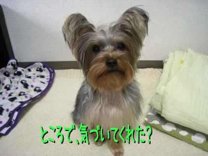 2_20090219194956.jpg