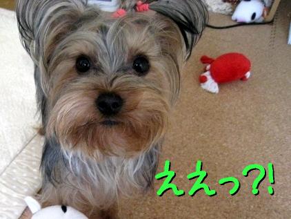 2_20090318155528.jpg