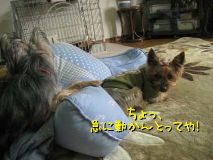 2_20090323175117.jpg