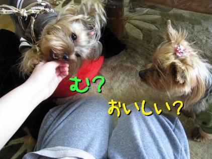 2_20090325145449.jpg