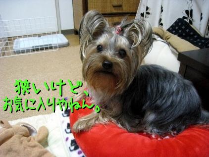 2_20090402194447.jpg