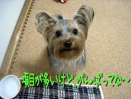 2_20090405194613.jpg