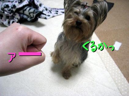 2_20090407202728.jpg