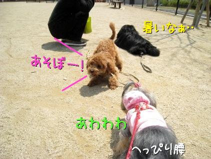 2_20090409185137.jpg