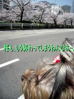 2_20090410213121.jpg