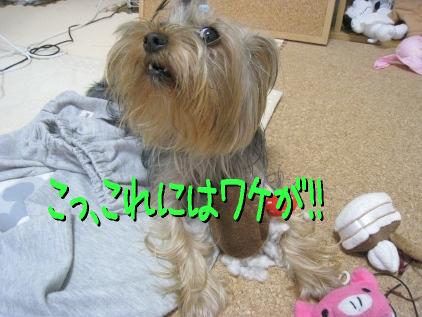 2_20090418165747.jpg