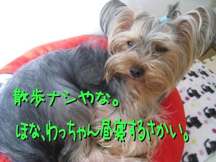 2_20090425195310.jpg