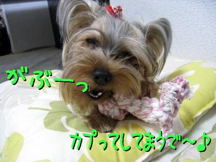 2_20090426143048.jpg