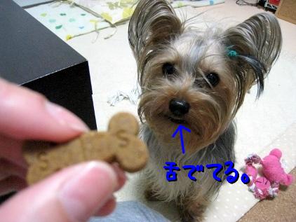 2_20090508200514.jpg