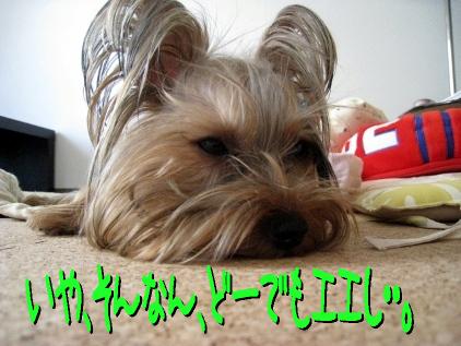 2_20090516211024.jpg