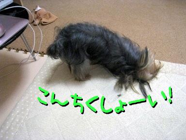 2_20090521192541.jpg