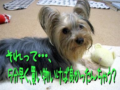 2_20090524153101.jpg