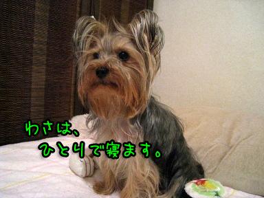 2_20090602185909.jpg