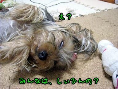 2_20090607144103.jpg