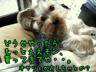 2_20090612172207.jpg