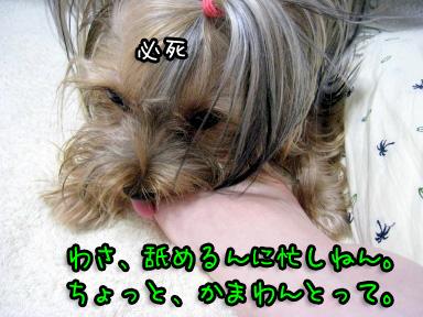 2_20090624144904.jpg