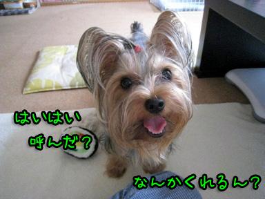 2_20090628122451.jpg