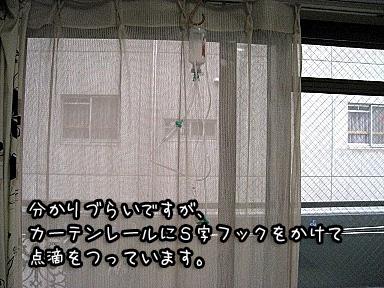 2_20090701170333.jpg