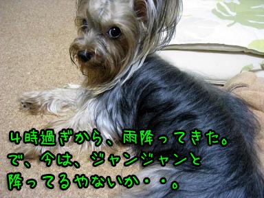 2_20090703193506.jpg