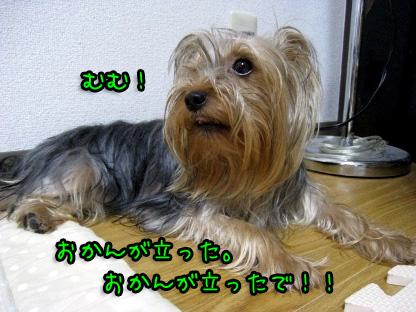 2_20090709190404.jpg