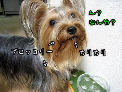 2_20090717193718.jpg