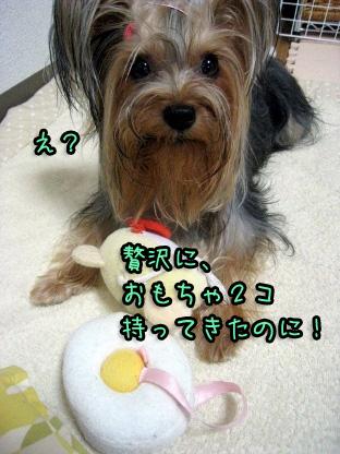 2_20090803151824.jpg
