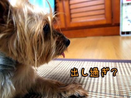 2_20090813183420.jpg