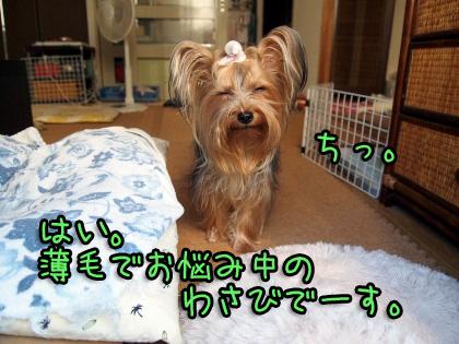 2_20090824201259.jpg