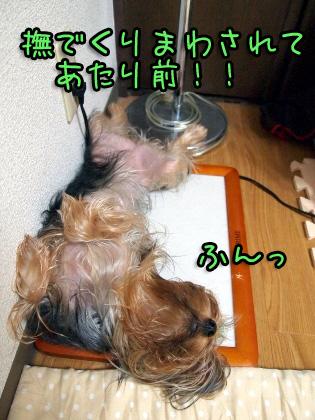 2_20090830144508.jpg
