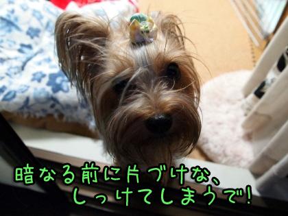 2_20090901192624.jpg