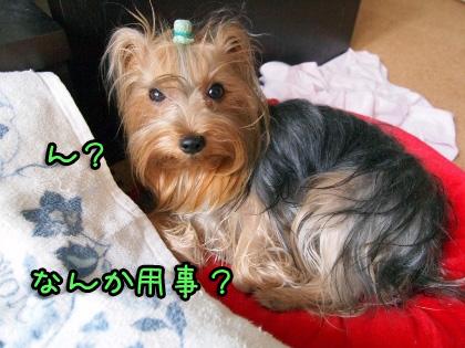 2_20090911194702.jpg