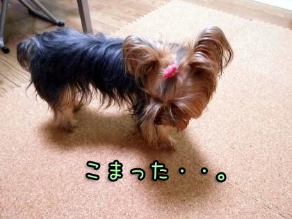 2_20090915193539.jpg