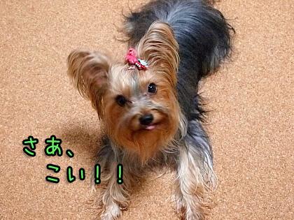 2_20090918194626.jpg