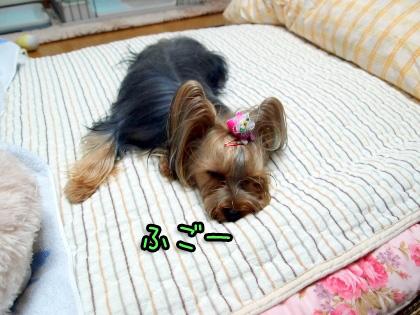 2_20090920201138.jpg