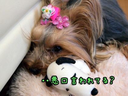 2_20090927102740.jpg