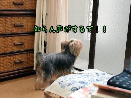 2_20090930180534.jpg