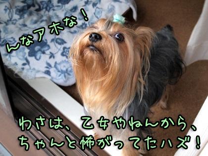 2_20091008192604.jpg