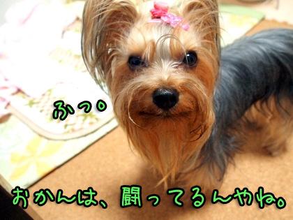 2_20091024192427.jpg