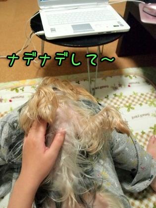 2_20091102181547.jpg