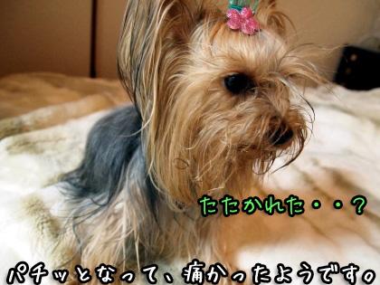 2_20091105192332.jpg