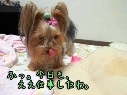 2_20091106200742.jpg
