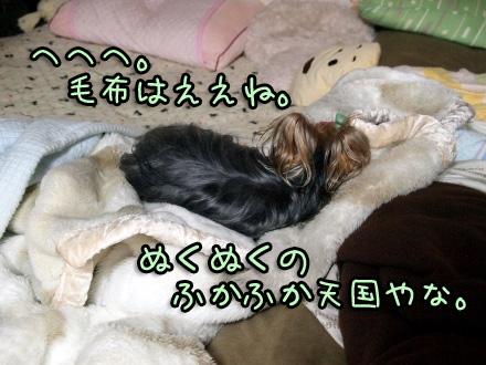 2_20091112190446.jpg