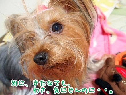 2_20091123191056.jpg